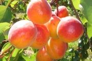 orangered